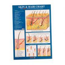 Sterex Skin & Hair Chart, A4