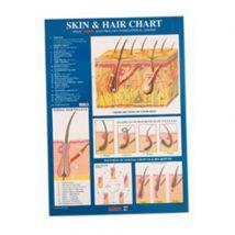 Sterex Skin & Hair Chart, A2